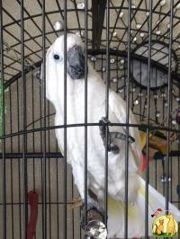 We Are Specialized In The Breeding Of Birds Parrots And We Sell Very Fertile Candle Lit Eg, Not_specified