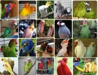 amazons,macaws,cockatoos,african greys and fertile eggs, Not_specified